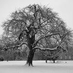 Lydiard Snow Tree 1