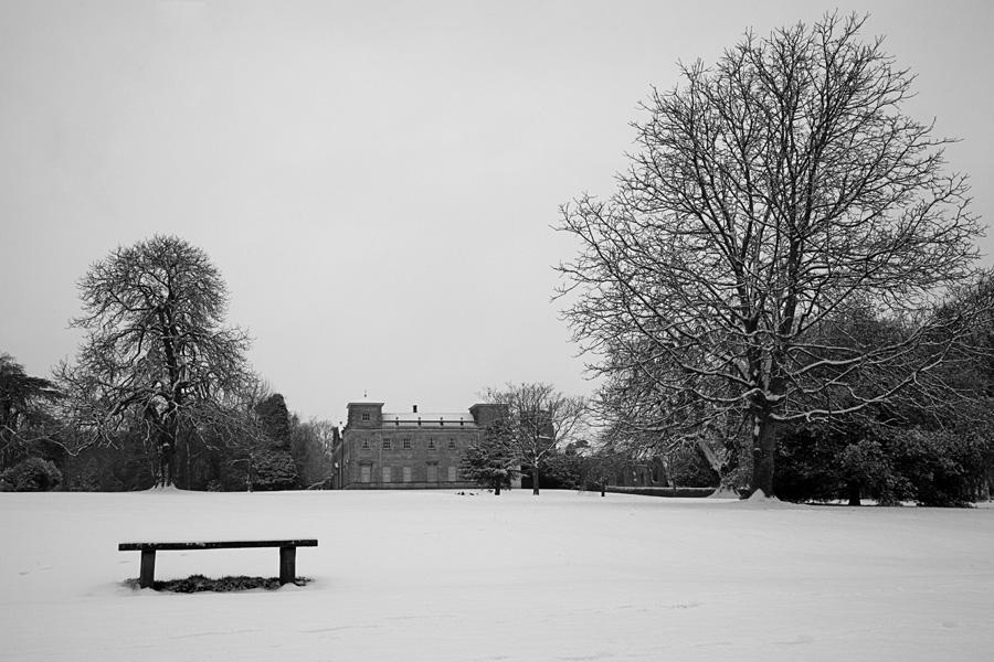 Lydiard Snow Tree 2