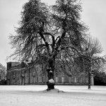 Lydiard Snow Tree 4