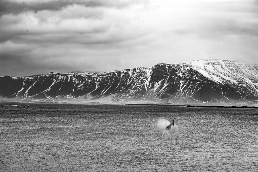 Reykjavik Bay
