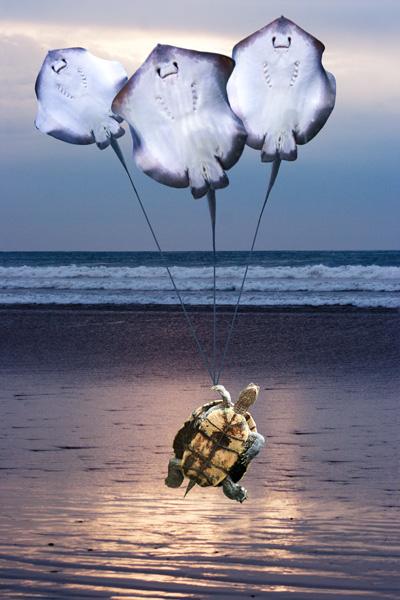 Stingray Balloons