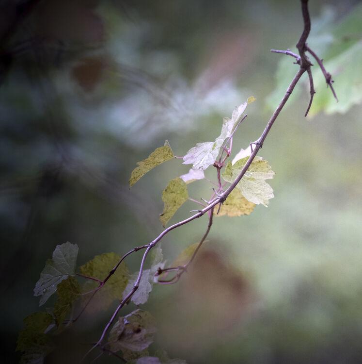DSCF0312 October Carl jenner lens