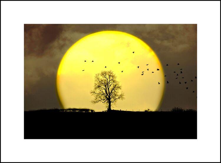 DSCF0405b The Birds