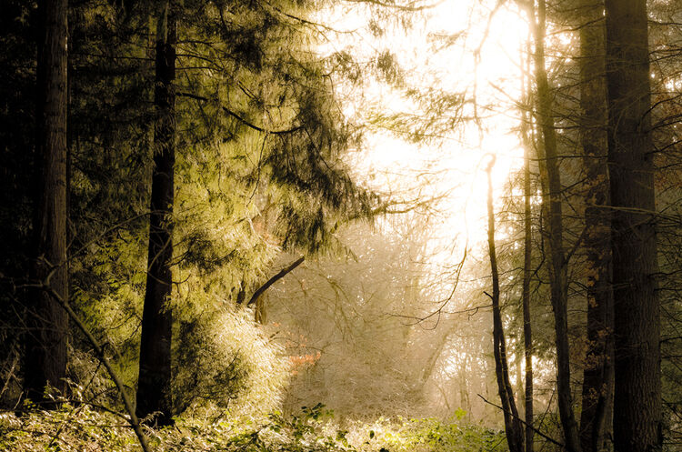 DSCF1404 DEcember Sunlight