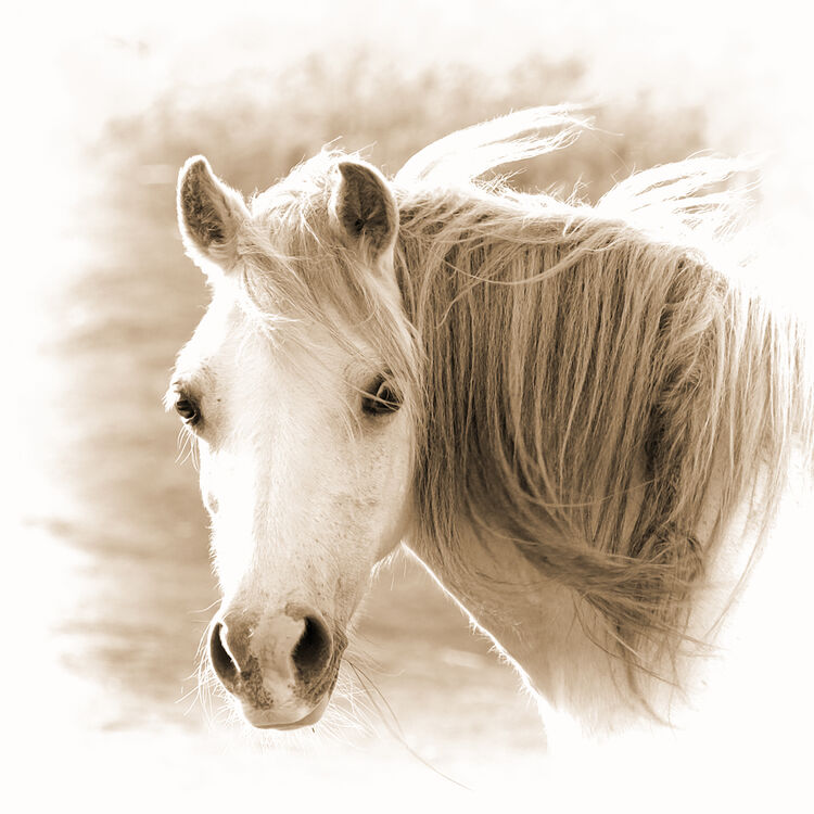 DSCF7554 topaz mountain pony