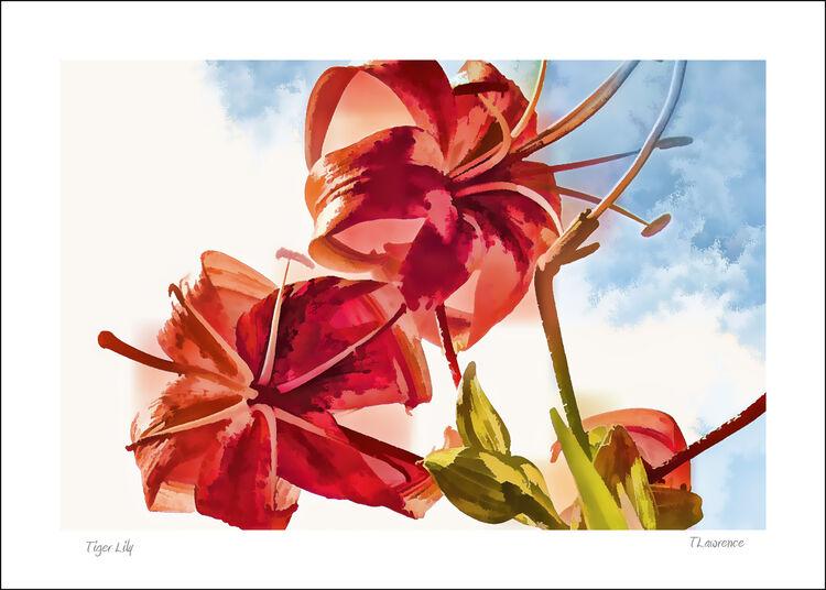 DSC 3063 Tiger Lily
