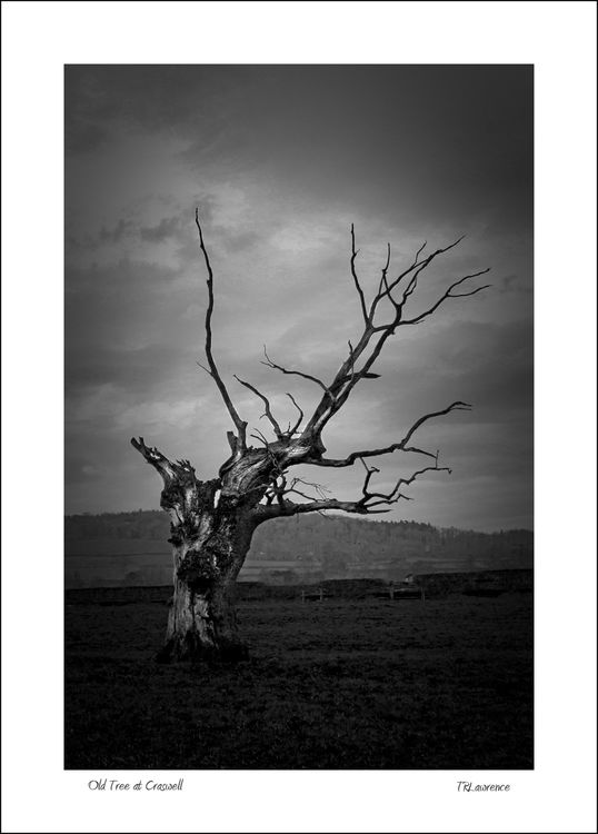 Old Tree at Craswell
