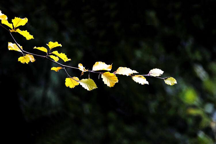 September Leaves in the Sun 24 x 16