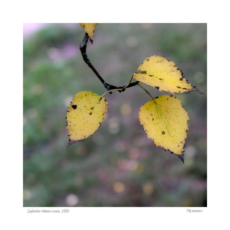 DSF0360 September Autumn Leaves