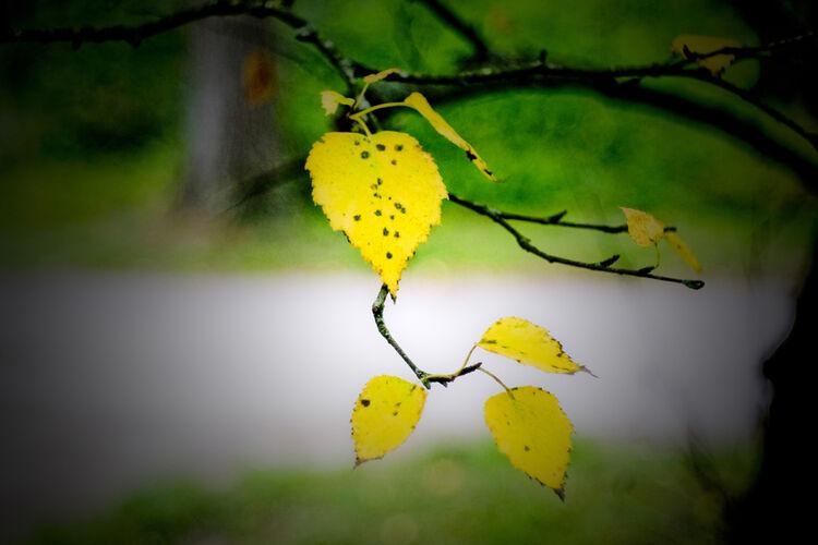 DSF0361 September Autumn Leaves Full