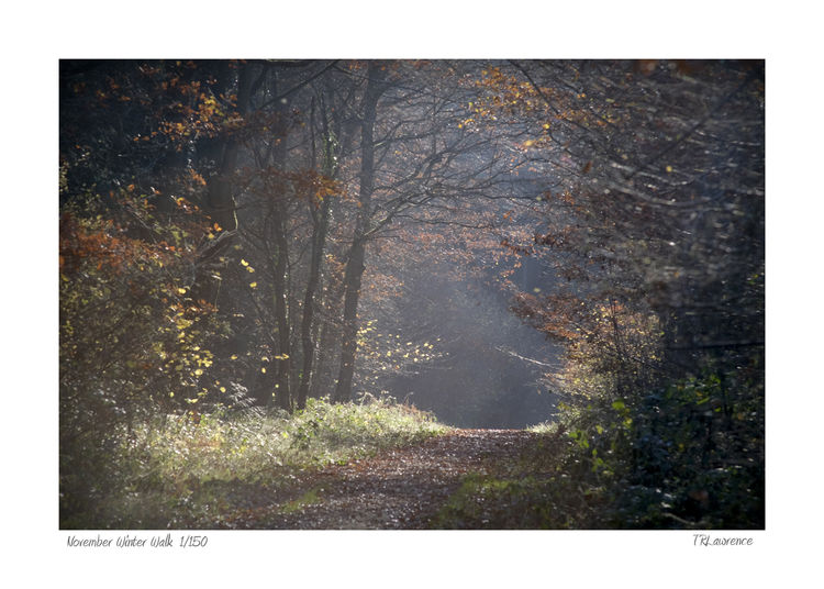 DSF1988 copy November Winter Walk
