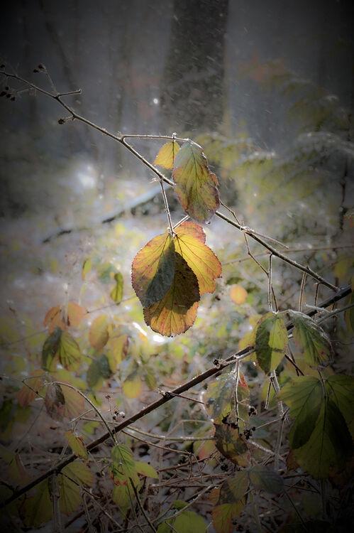 DSF8976 February Leaves in Sunlight