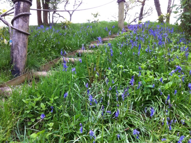 Bluebells up steps