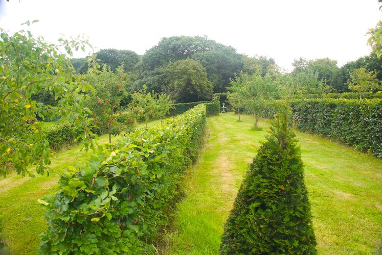 Maturing Beech hedging and Yew Markers