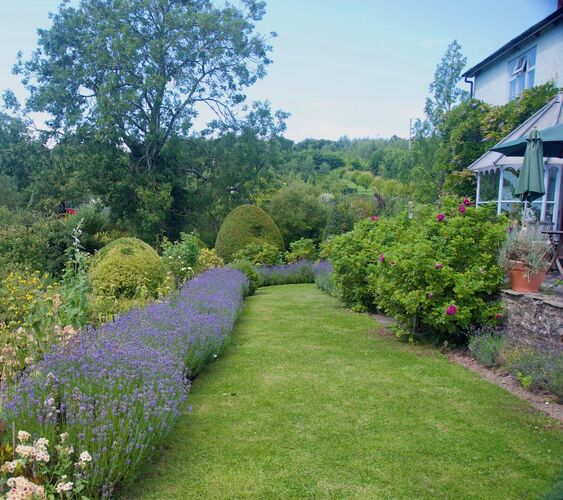 Lavender hedging on top lawn