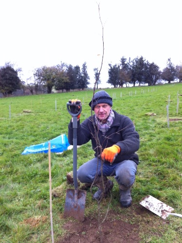 First tree planted in woodland