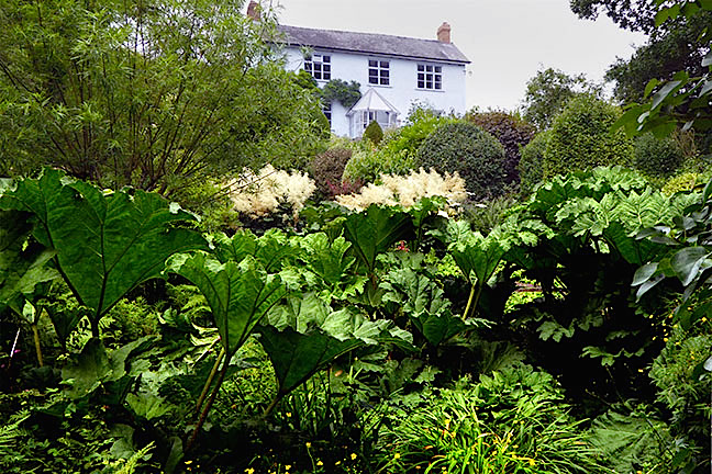 Gunnera and aruncus to houseby Ian Dawson