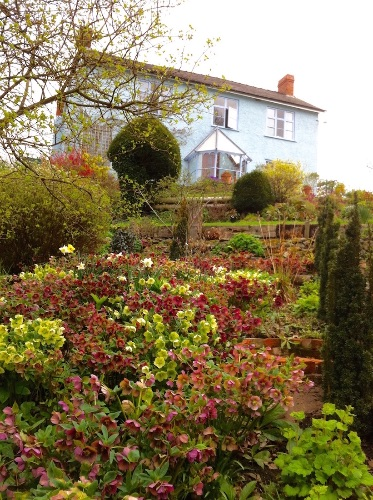 Hellebore bank to house