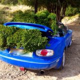 How many box plants can you fit in an MX5