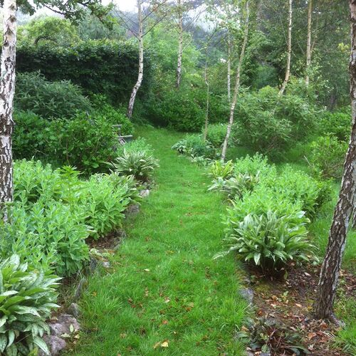 Hydrangea Grove