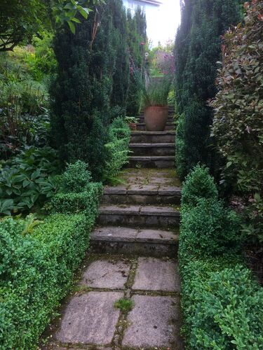 Yew Steps