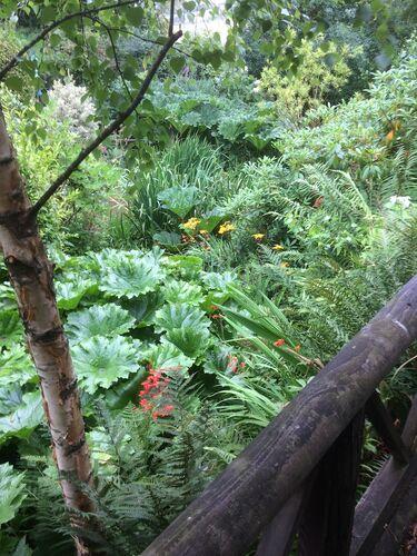 Bogland from Monkey Perch