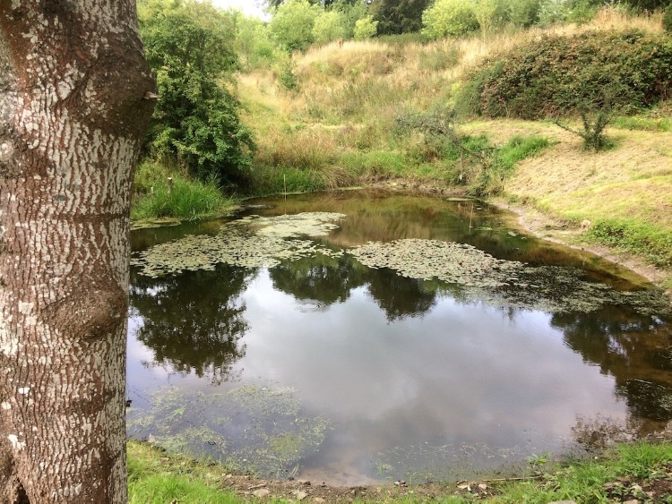 Pond from Ash