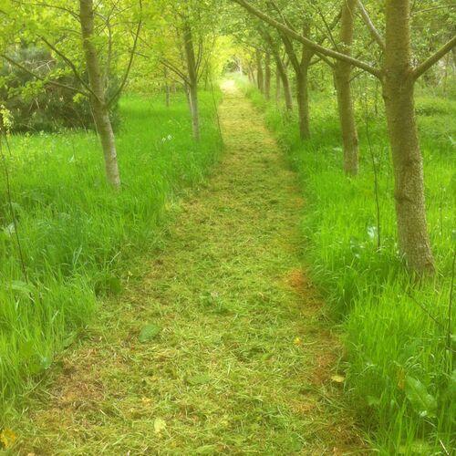Through the Silver Poplar Grove