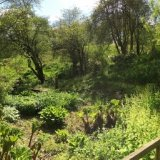 bog garden in spring
