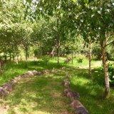 new Hydrangea walk