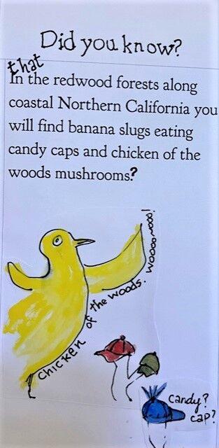 mushroom page 2
