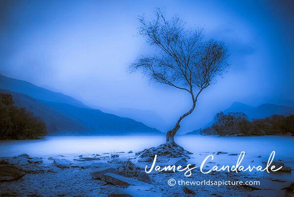 Lone Tree Blues