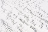 Glacial Pattern in White