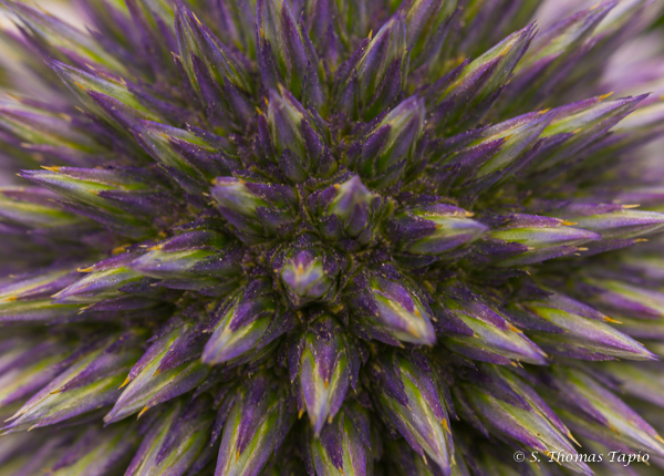 Flower Power in macro
