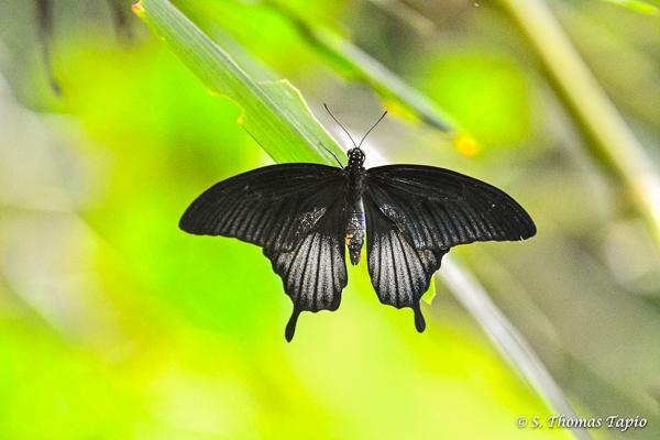 Butterfly in Mariposario