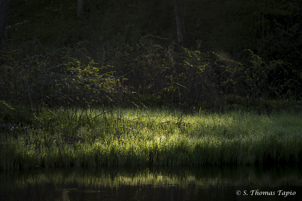 Helge river banks