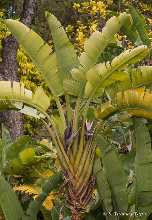 Molino de Inca Botanic Gardens