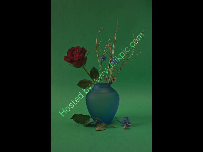 Rose and Cornflowers