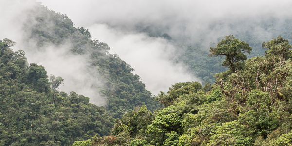 Andean cloud-forest near the Kosñipata Valley