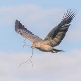Chaco Eagle (2)