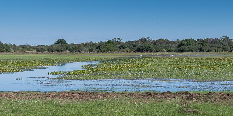 The seasonal floodplains provide the perfect habitat for many waterbird species