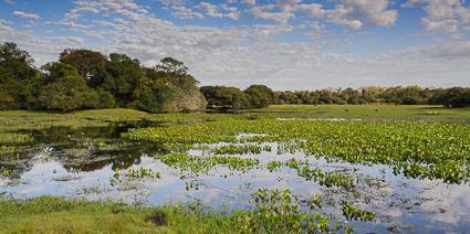 Seasonal flooded wetlands, Southern Pantanal, Brazil