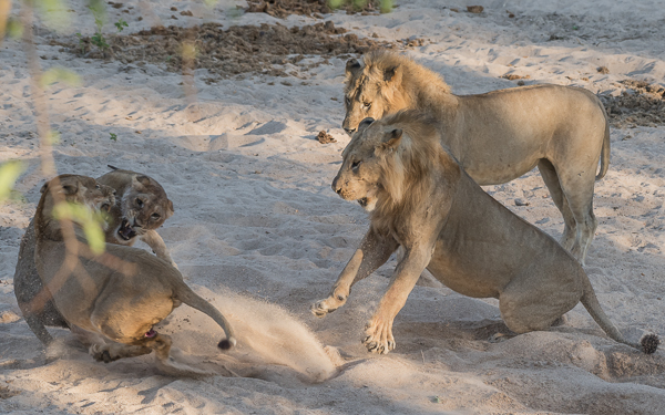 In the heat of the moment the youngster mistakenly attacks her mother