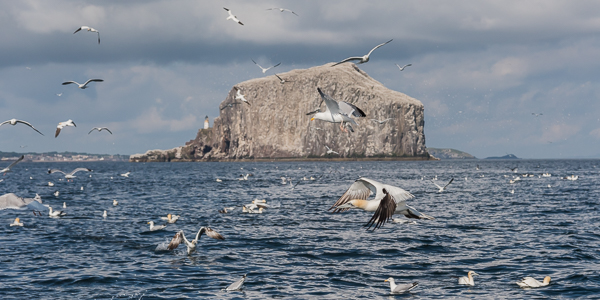 Bass Rock - Firth of Forth, East Lothian