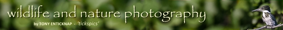 tickspics - wildlife and nature photography