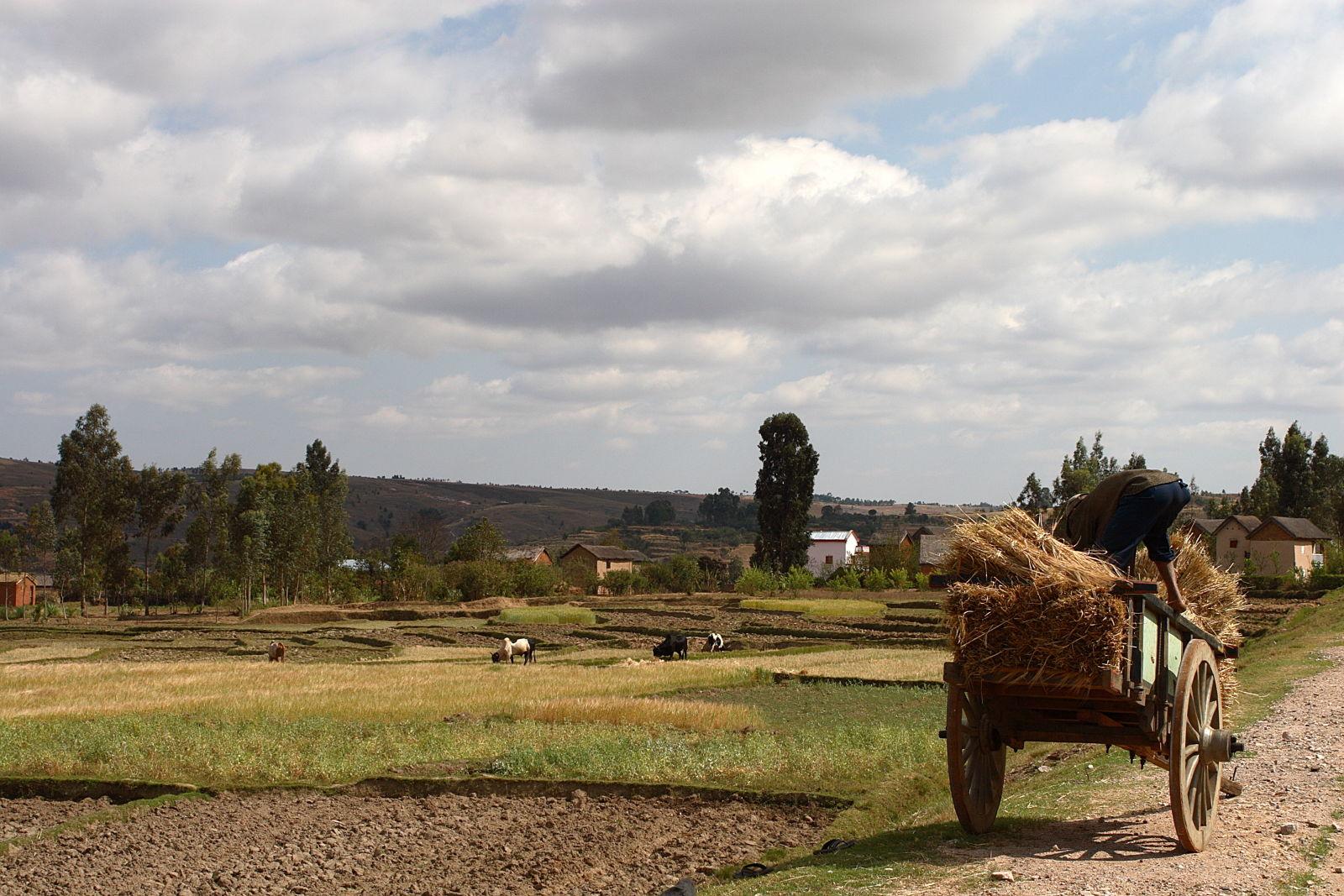 Harvest Time, Madagascar