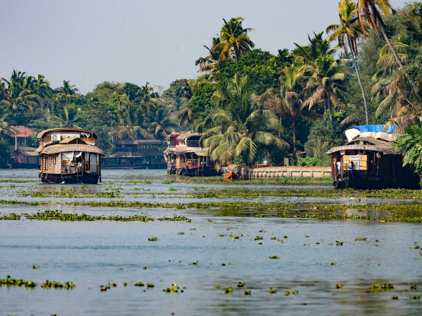 The Backwaters, Kerala