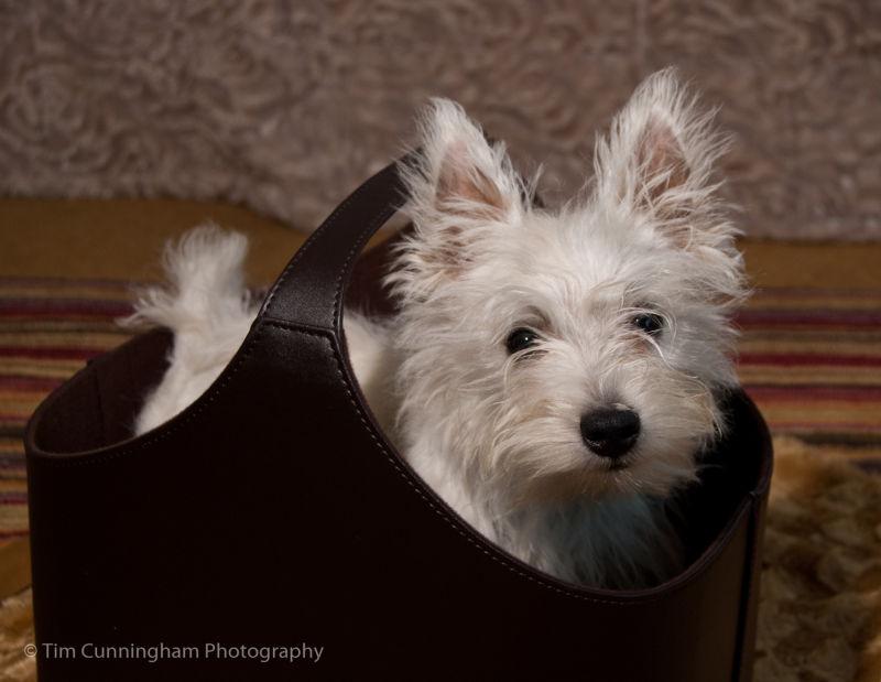 Ellie in a Bucket