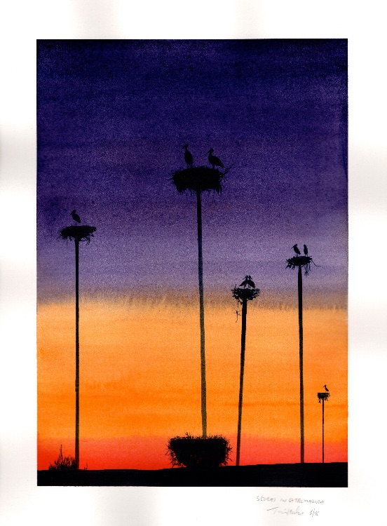 Storks in Extremaduria.  (after Stephen Wilkes). 18 x 26cm