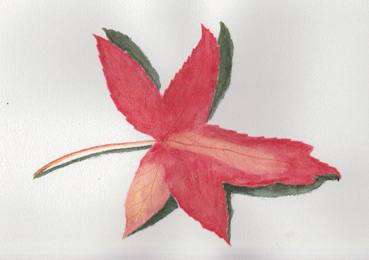 Leaf 2. 27 x 17cm